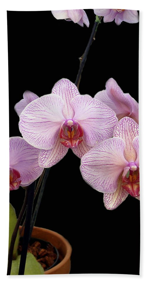 Flowers Bath Towel featuring the photograph Pink Orchids by Kurt Van Wagner