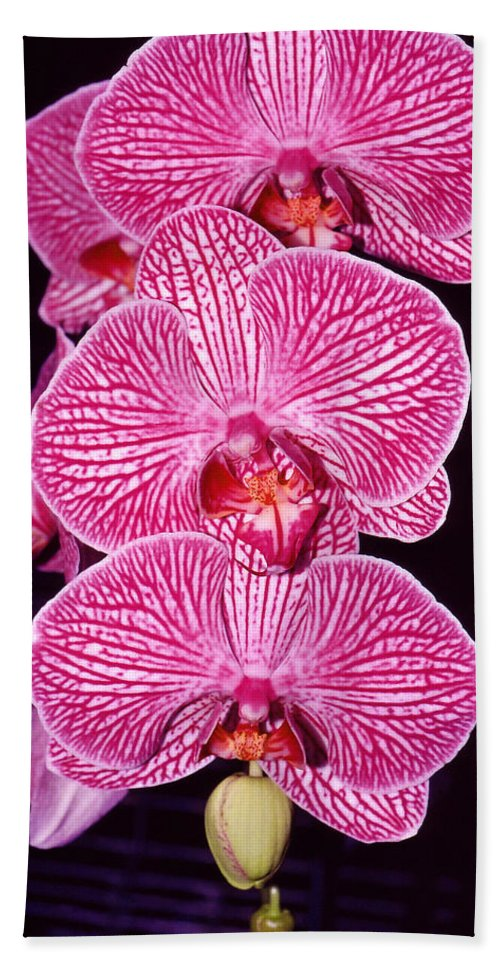 Photography Bath Sheet featuring the photograph Pink Orchids by Susanne Van Hulst