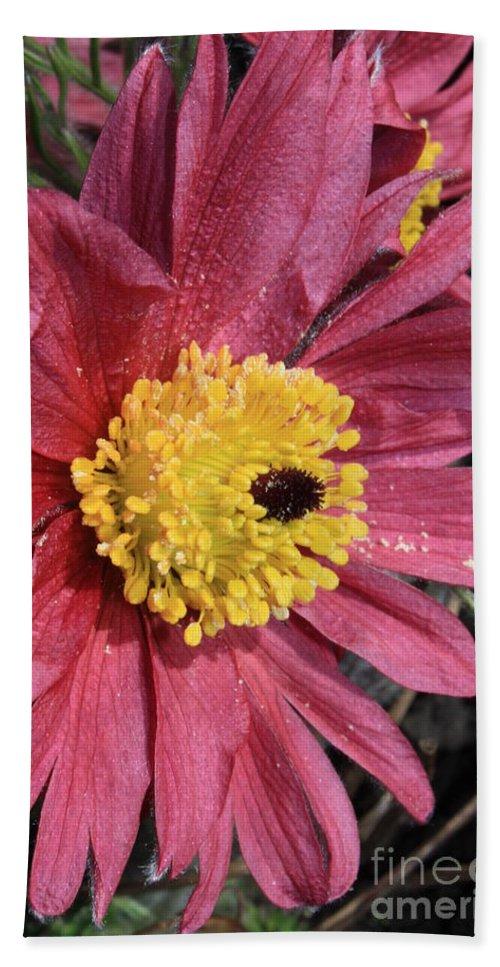 Flower Bath Sheet featuring the photograph Pink Pasque Flower by Carol Groenen