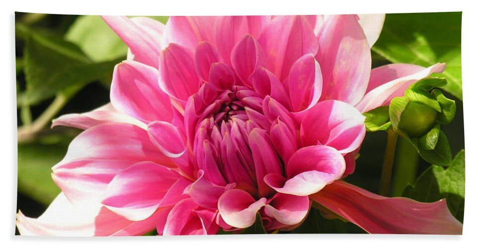 Pink Hand Towel featuring the photograph Pink Pedals by Diane Greco-Lesser