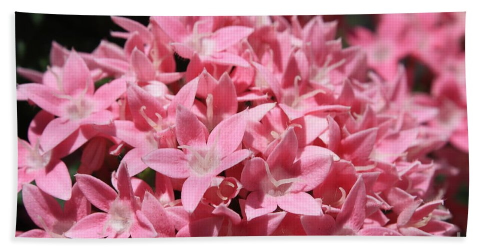 Pink Pentas Bath Sheet featuring the photograph Pink Pentas Beauties by Carol Groenen