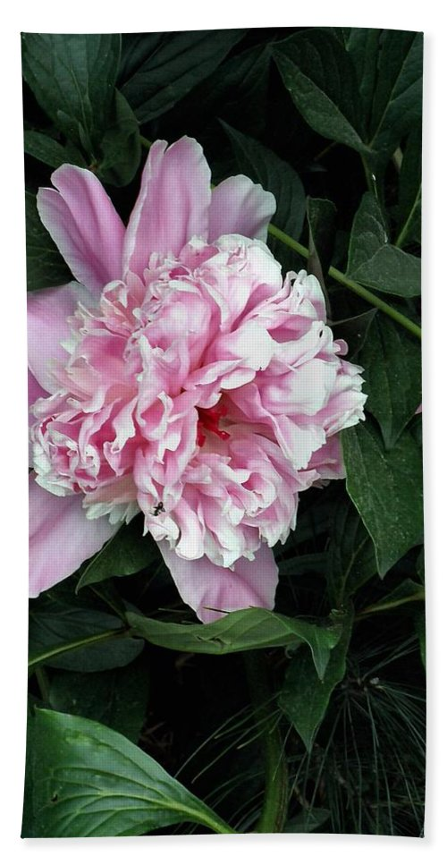 Peony Bath Sheet featuring the photograph Pink Peone by T Cook
