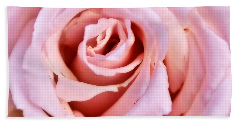 Exotic Hand Towel featuring the photograph Pink Pink Rose by Svetlana Sewell