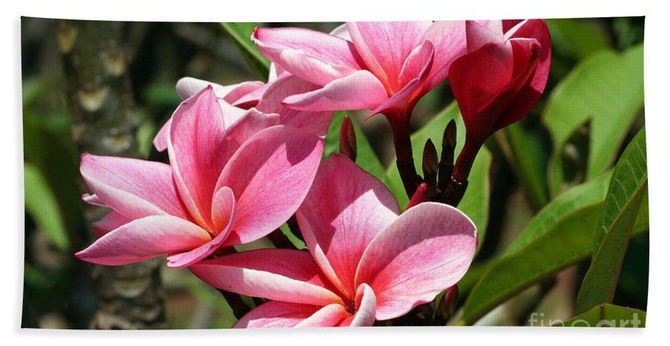 Flower Bath Sheet featuring the photograph Pink Plumeria by Teresa Zieba