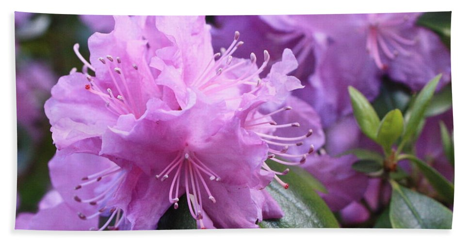 Flower Bath Towel featuring the photograph Light Purple Rhododendron With Leaves by Carol Groenen