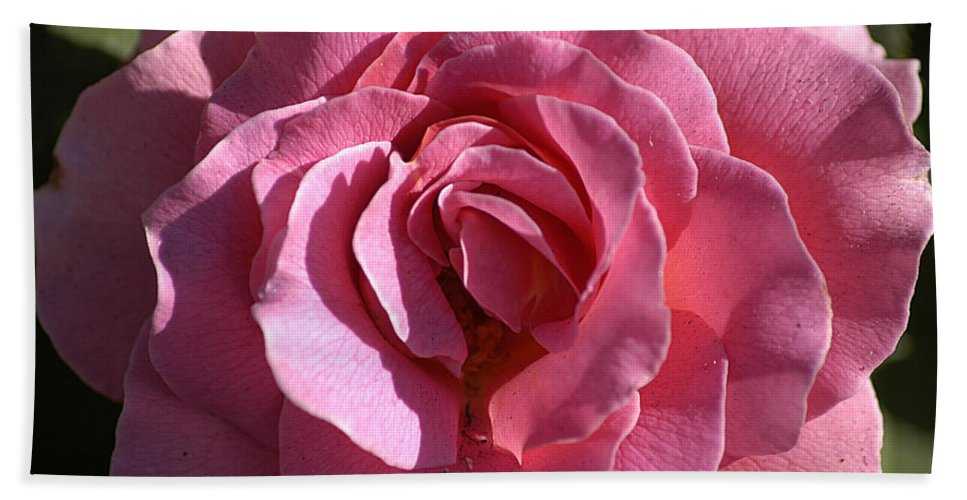 Clay Hand Towel featuring the photograph Pink Rose by Clayton Bruster