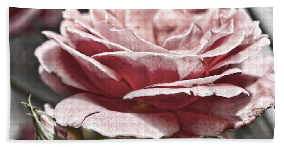 Pink Bath Sheet featuring the photograph Pink Rose Faded by Sharon Popek