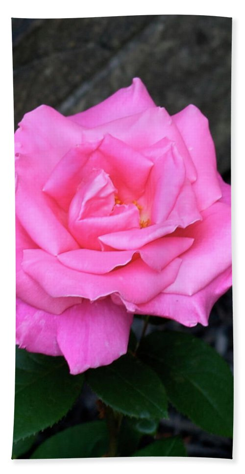 Pink Bath Sheet featuring the photograph Pink Rose by George Strout