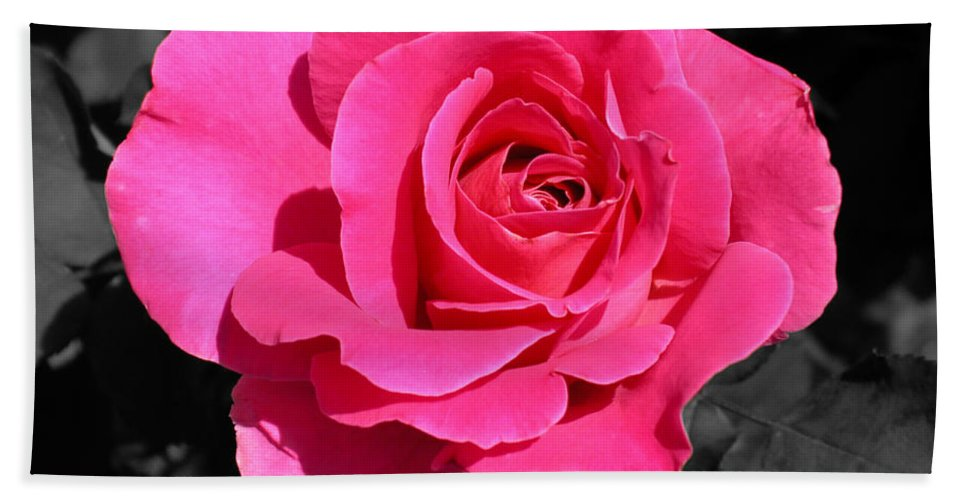 Pink Hand Towel featuring the photograph Perfect Pink Rose by Michael Bessler