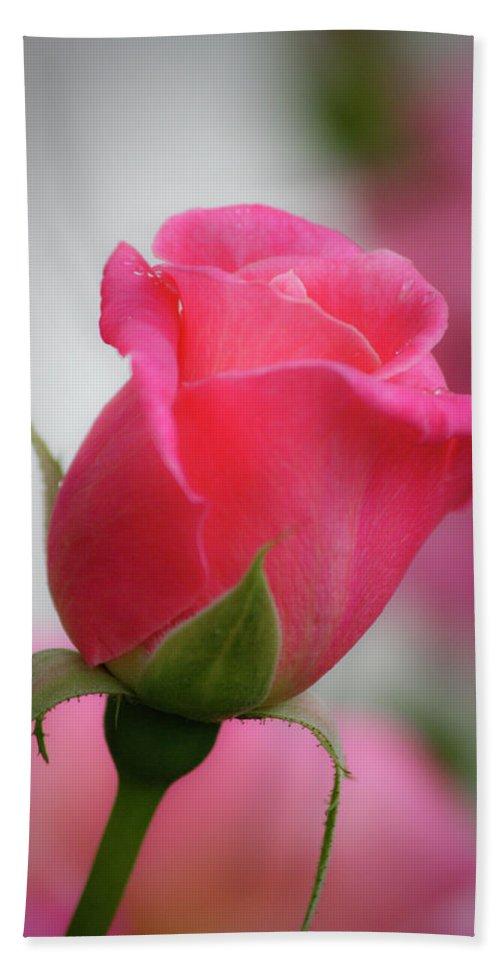 Rose Bath Sheet featuring the photograph Pink Rosebud 1 by Teresa Mucha