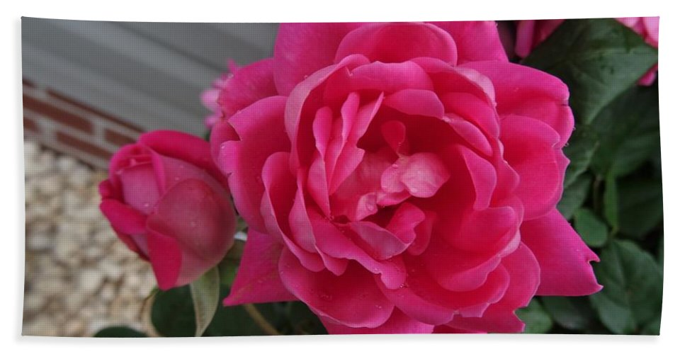 Pink Bath Sheet featuring the photograph Pink Roses 2 by Scenic Sights By Tara