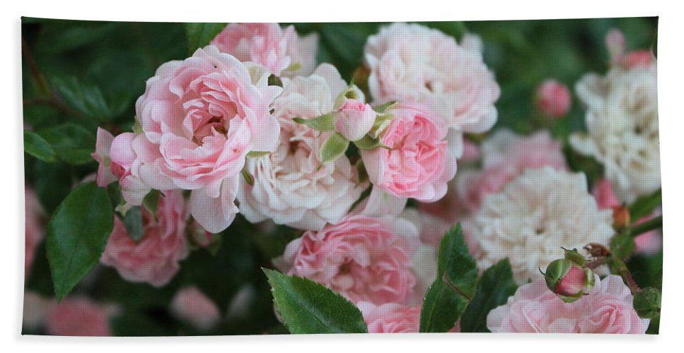 Greeting Card Hand Towel featuring the photograph Pink Roses Birthday Card by Carol Groenen