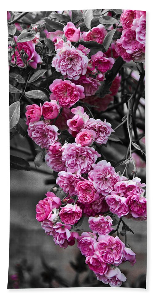 Flower Hand Towel featuring the photograph Pink Roses by Svetlana Sewell