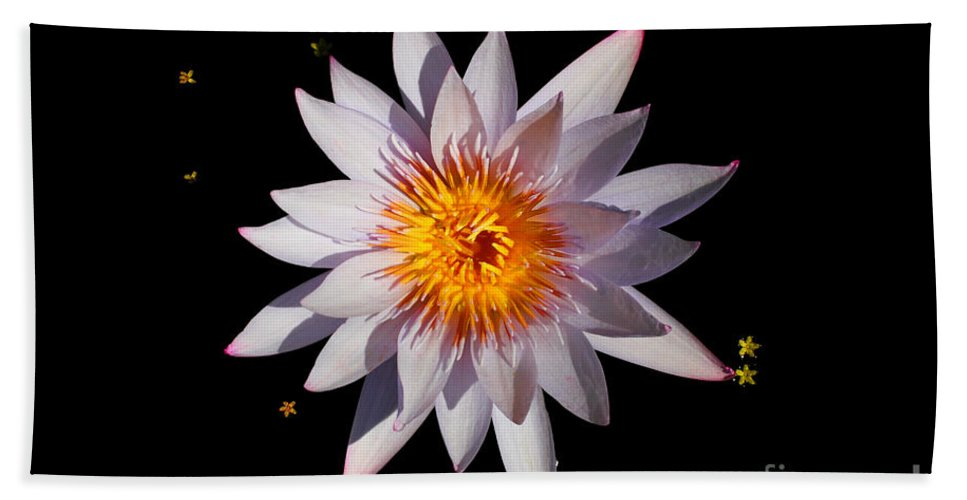 Pastel Hand Towel featuring the Pink Tipped Water Lily On Black by Layla Alexander