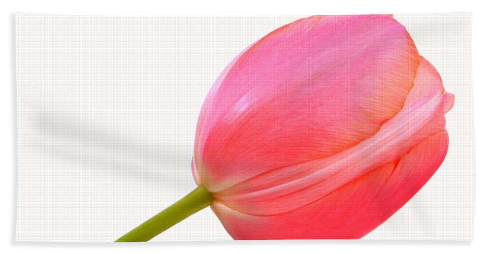 Pink Bath Sheet featuring the photograph Pink Tulip by James BO Insogna