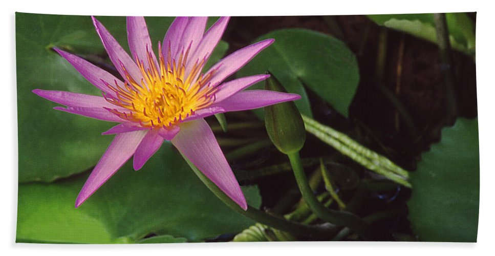 Water Lilies Hand Towel featuring the photograph Pink Water Lily by Jim Smith