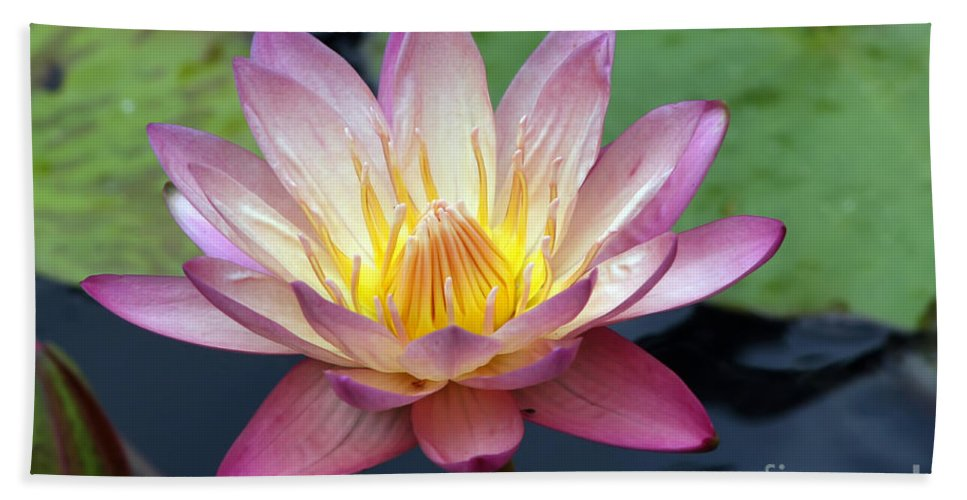 Wildflower Hand Towel featuring the photograph Pink Water Lily by Teresa Zieba
