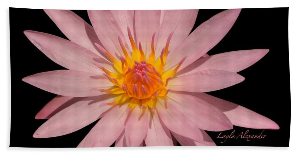 Layla Alexander Bath Sheet featuring the photograph Pink Water Lily Transparent by Layla Alexander