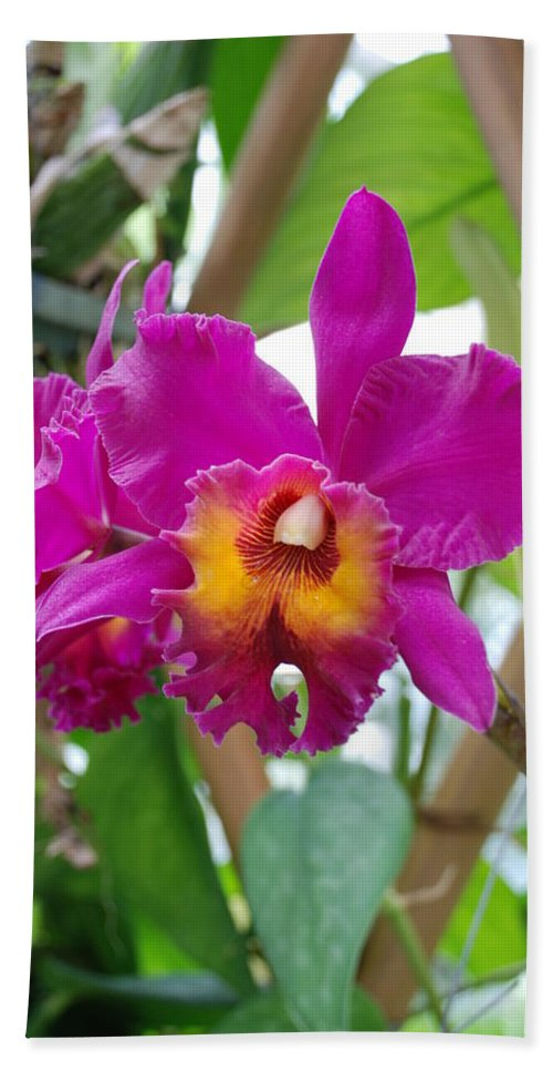 Macro Bath Towel featuring the photograph Pinkishyellow Orchid by Rob Hans