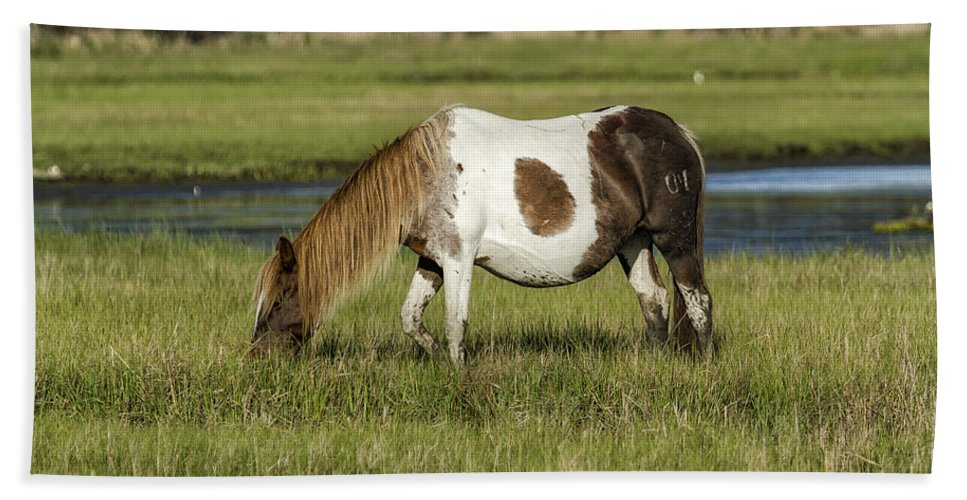 Pinto Mare With The Copper Colored Mane No 3