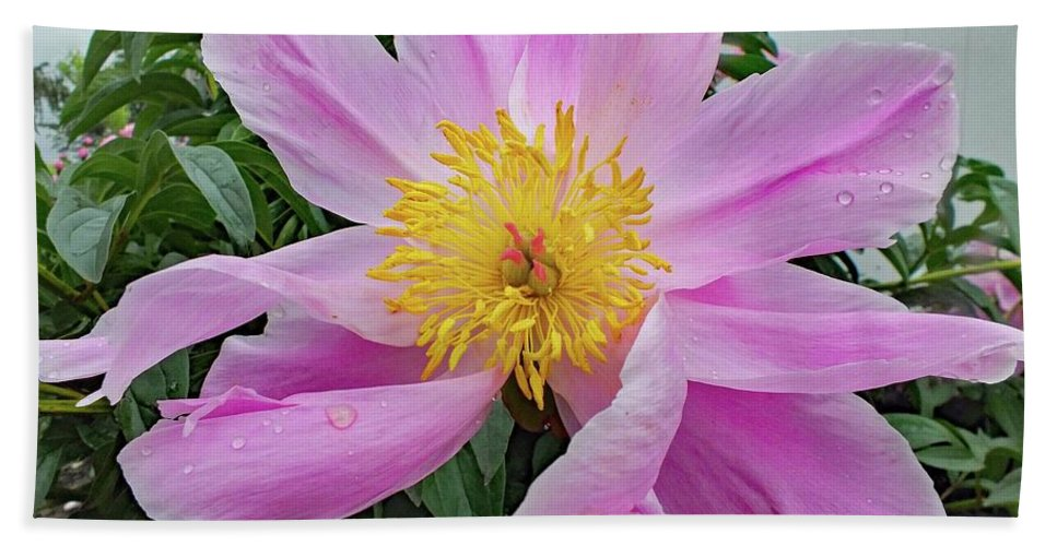Bowl Of Beauty Peony Bath Sheet featuring the photograph Pinwheel - Bowl Of Beauty by Cindy Treger
