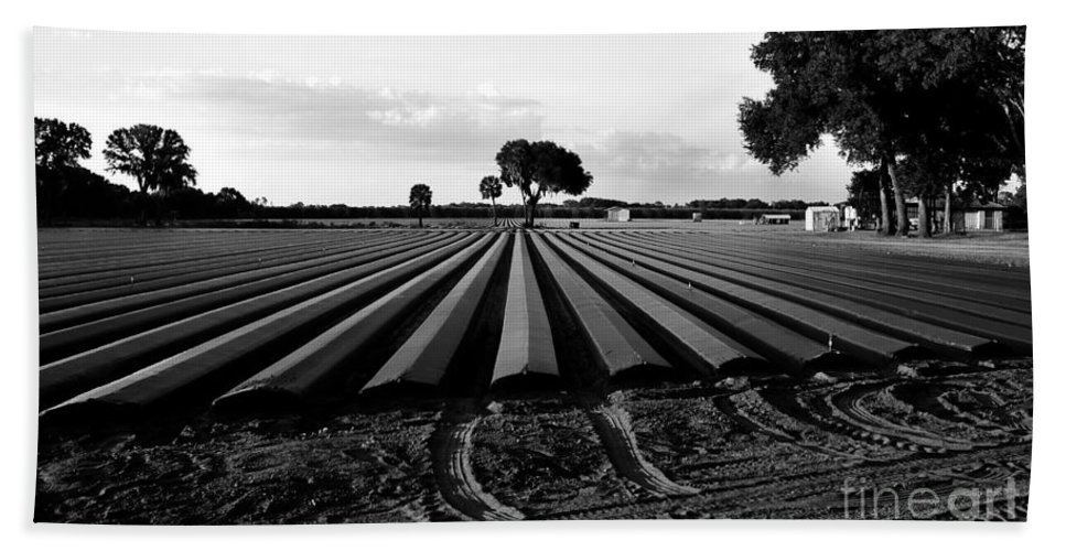 Farming Bath Sheet featuring the photograph Planted Fields by David Lee Thompson