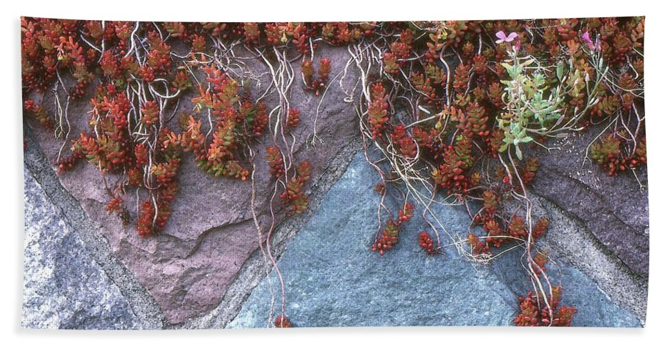 Abstract Hand Towel featuring the photograph Plants On The Rock Two by Lyle Crump