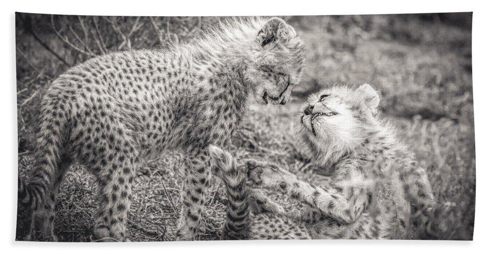 Cheetah Hand Towel featuring the photograph Playtime In Africa- Cheetah Cubs Acinonyx Jubatus by Cindi Alvarado