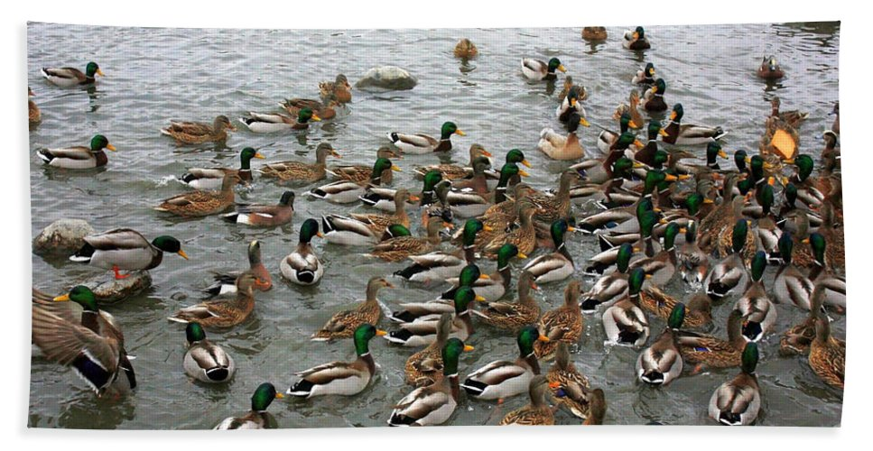 Ducks Hand Towel featuring the photograph Please Pass The Toast by Carol Groenen