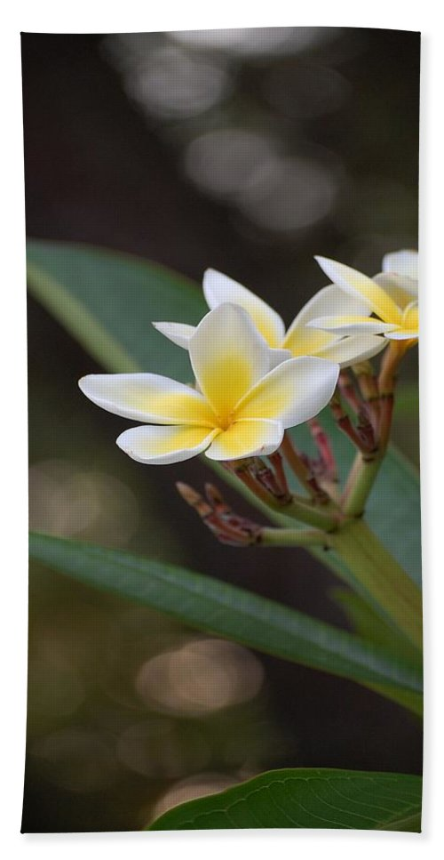 Plumeria Hand Towel featuring the photograph Plumeria II by Robert Meanor
