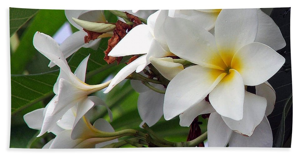 Flower Hand Towel featuring the photograph Plumeria by Robert Meanor