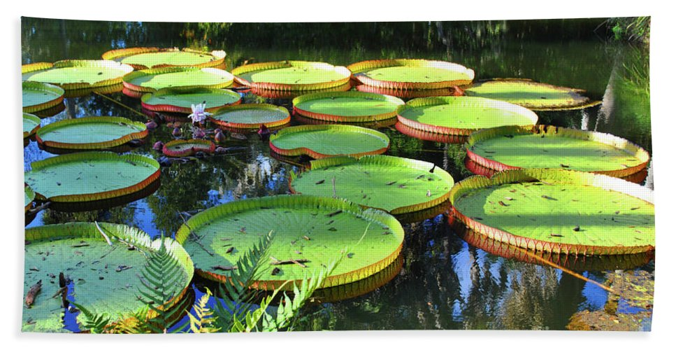 Pods Bath Towel featuring the photograph Pods Of The Pond by Jost Houk