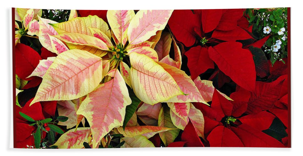 Poinsetta Hand Towel featuring the photograph Poinsetta Greetings by Joan Minchak