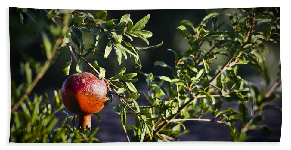 Pomegranate Bath Sheet featuring the photograph Pomegranate by Teresa Mucha
