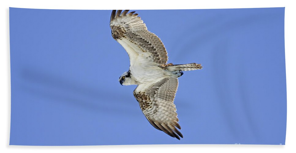 Hand Towel featuring the photograph Ponce Osprey 1 by Deborah Benoit