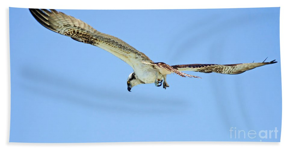 Osprey Hand Towel featuring the photograph Ponce Osprey 3 by Deborah Benoit