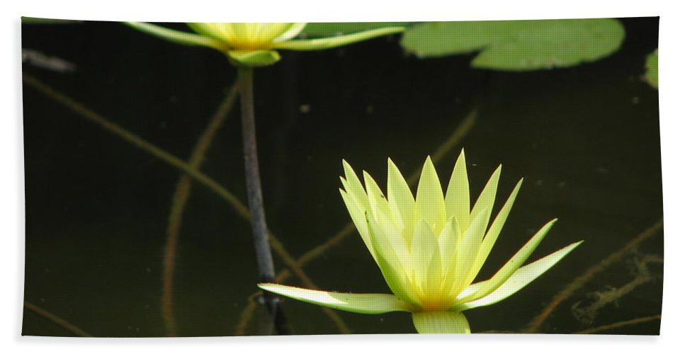 Pond Hand Towel featuring the photograph Pond by Amanda Barcon
