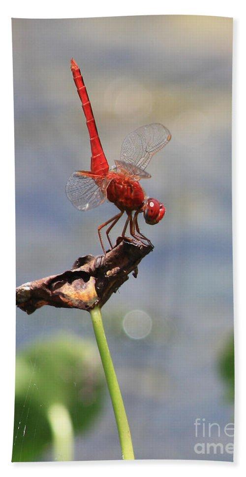 Dragonflies Bath Sheet featuring the photograph Pond Ballerina by Carol Groenen