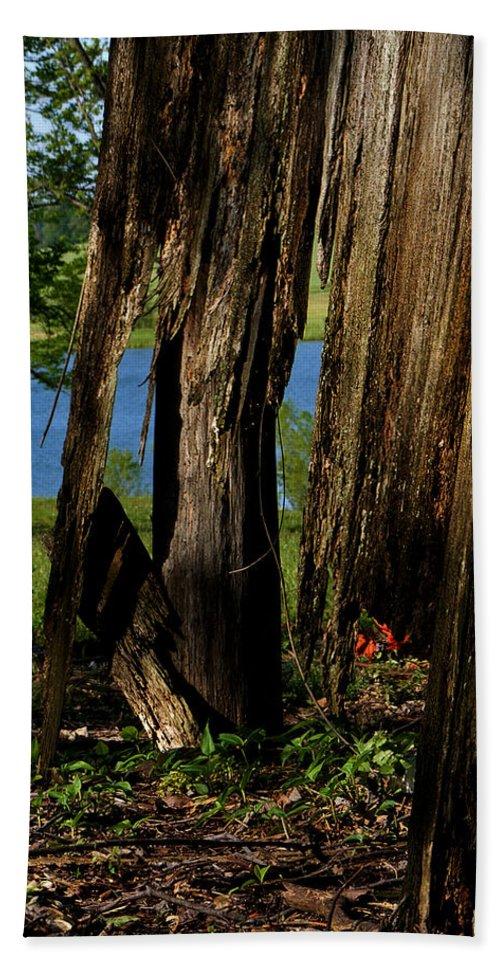 Landscape Bath Sheet featuring the photograph Pond Fragments by Rachel Christine Nowicki