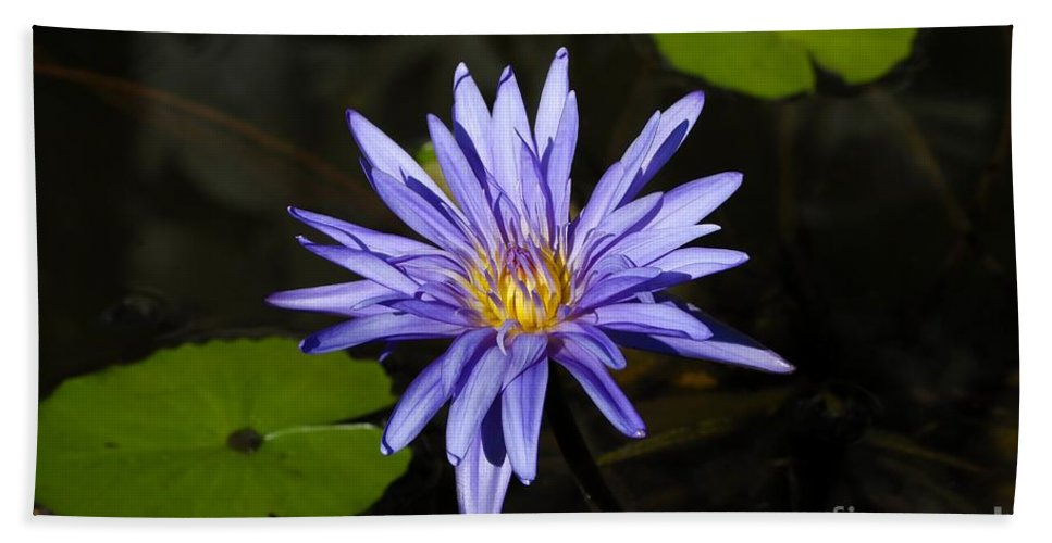 Pond Lily Bath Towel featuring the photograph Pond Lily by David Lee Thompson