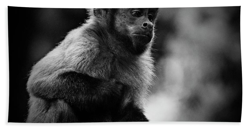 Monkey Hand Towel featuring the photograph Pondering Monkey by Jan Van der Westhuizen