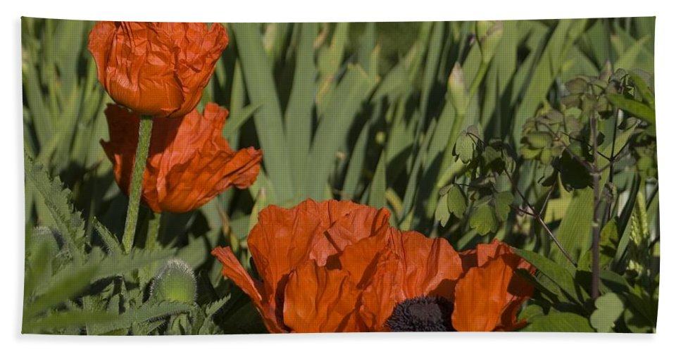 Poppy Bath Sheet featuring the photograph Poppies 1 by Sara Stevenson