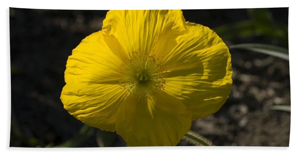 Flowers Hand Towel featuring the photograph Poppies 2 by Sara Stevenson