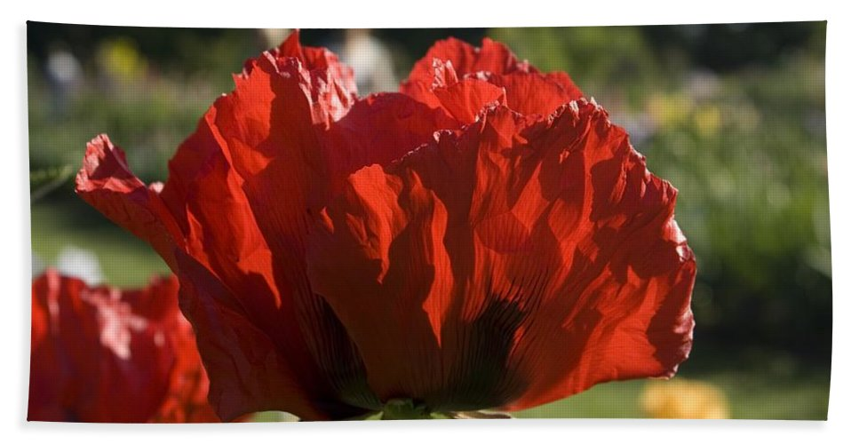 Poppy Hand Towel featuring the photograph Poppies 4 by Sara Stevenson
