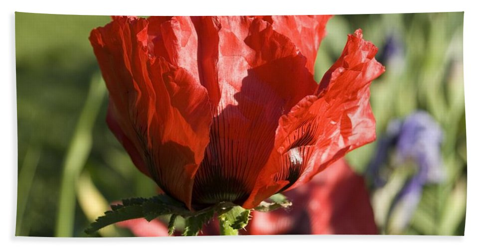 Poppies Bath Sheet featuring the photograph Poppies 5 by Sara Stevenson
