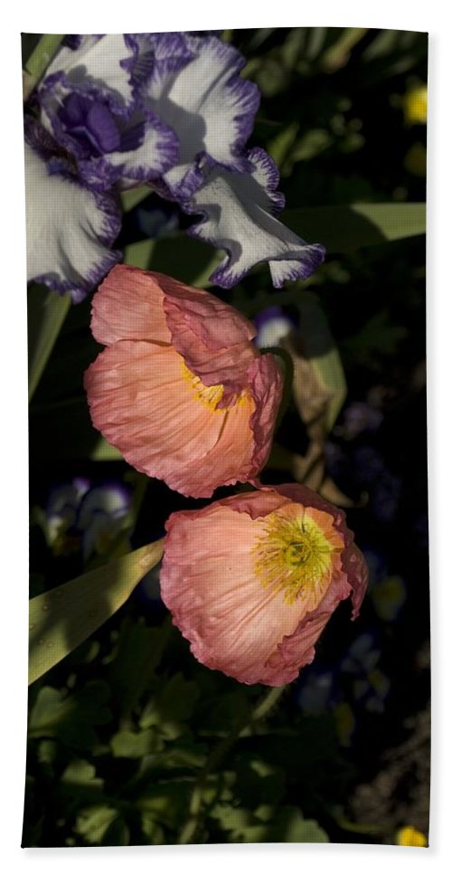 Poppy Hand Towel featuring the photograph Poppies 6 by Sara Stevenson