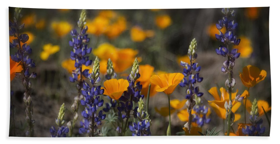 Wildflowers Bath Towel featuring the photograph Poppies And Lupines by Saija Lehtonen
