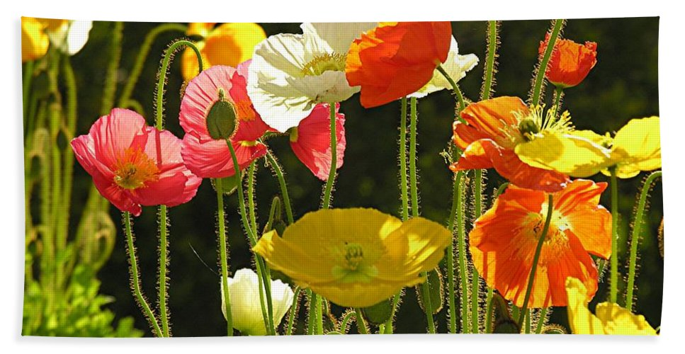 Poppy Bath Towel featuring the photograph Poppies by Diane Greco-Lesser