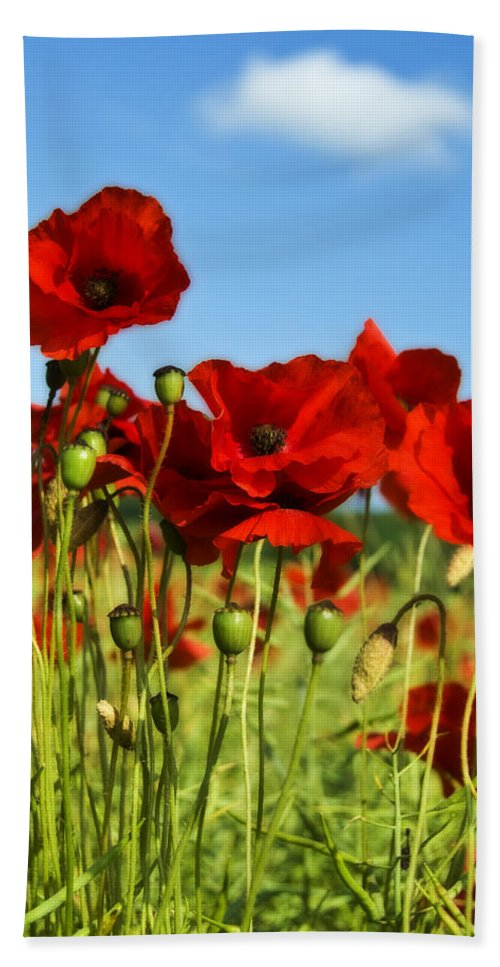 Field Hand Towel featuring the photograph Poppies by Svetlana Sewell