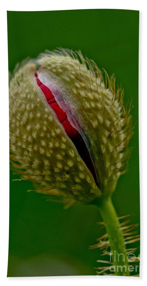 Poppy Bud Hand Towel featuring the photograph Poppy Bud by Brothers Beerens